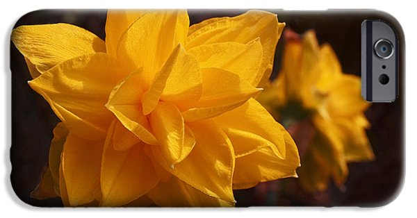 Golden iPhone Cases - Narcissus Sweet Sue in Full Bloom iPhone Case by Rona Black