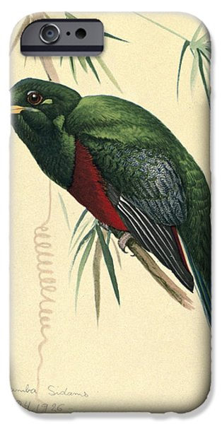 Ethiopia iPhone Cases - Narina Trogon iPhone Case by Louis Agassiz Fuertes