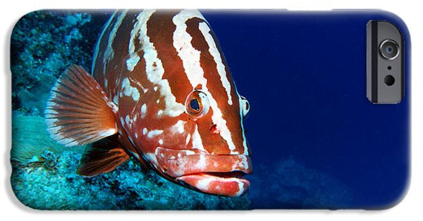 Atlantis iPhone Cases - Nassau Grouper iPhone Case by Jimmy Nelson