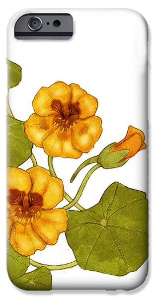 Flora Drawings iPhone Cases - Nasturtium iPhone Case by Catherine Noel