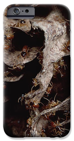 Nasute Termite Nest Amazonian Peru iPhone Case by Mark Moffett