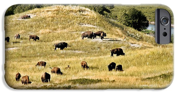 Bison Photographs iPhone Cases - National Bison Range Moiese MT iPhone Case by Christine Till