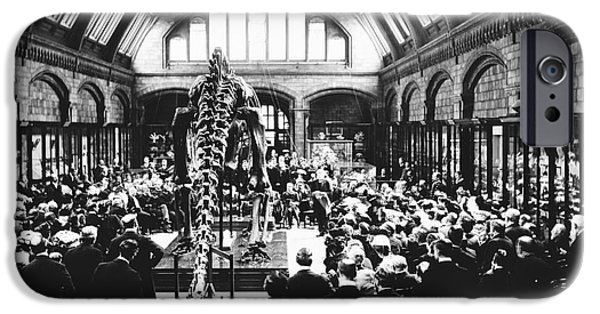 Carnegie Museum iPhone Cases - Natural History Museums Diplodocus, 1905 iPhone Case by Natural History Museum, London