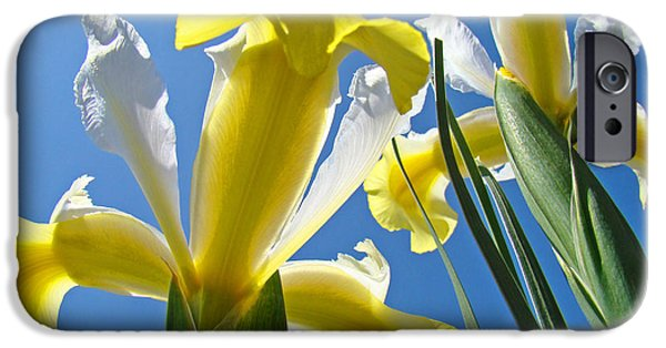 Yellow Bearded Iris iPhone Cases - Nature Art Prints Yellow White Irises Flowers iPhone Case by Baslee Troutman Nature Art Prints