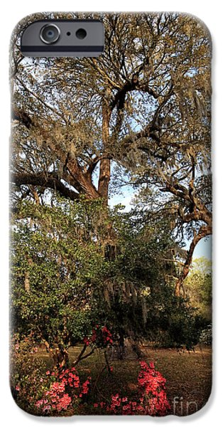 Historic Site iPhone Cases - Nature at the Plantation iPhone Case by John Rizzuto