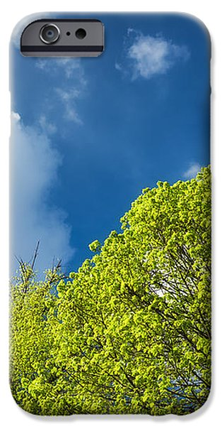Nature in spring - bright green tree and blue sky iPhone Case by Matthias Hauser