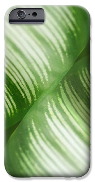 Nature Leaves Abstract in Green 2 iPhone Case by Natalie Kinnear