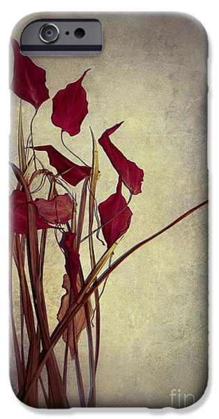 Still Life iPhone Cases - Nature Morte du Moment  01 - pr03 iPhone Case by Variance Collections