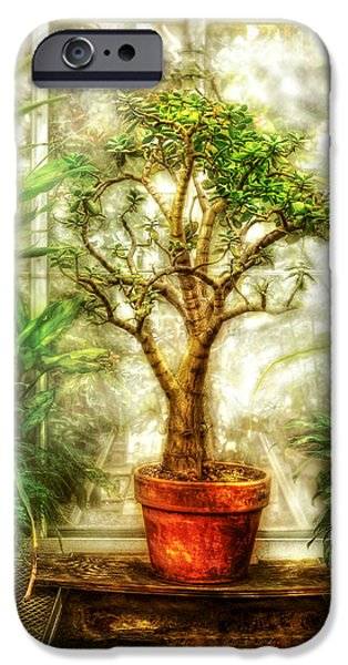 Window Of Life iPhone Cases - Nature - Plant - Tree of life  iPhone Case by Mike Savad