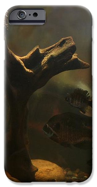 Nature Under Water iPhone Case by Linda Fowler
