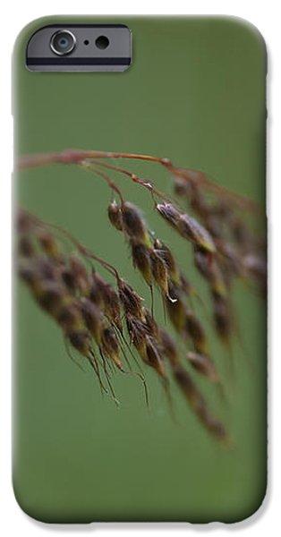 Nature Whisper.. iPhone Case by Nina Stavlund
