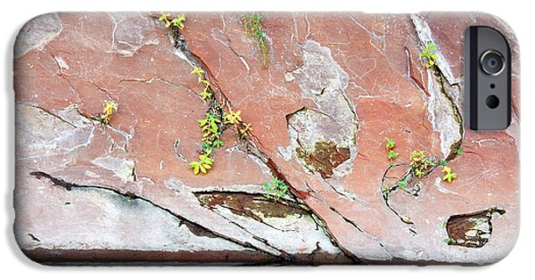 West Fork iPhone Cases - Natures Abstract iPhone Case by Tam Ryan