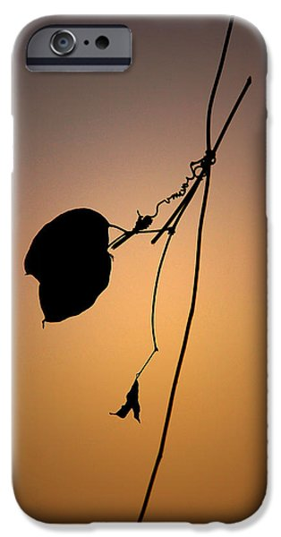 Autographed iPhone Cases - Natures Autograph iPhone Case by Janet Pancho Gupta