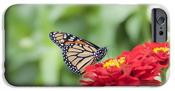 Buterfly iPhone Cases - Natures Beauty - The Buterfly iPhone Case by Bill Cannon