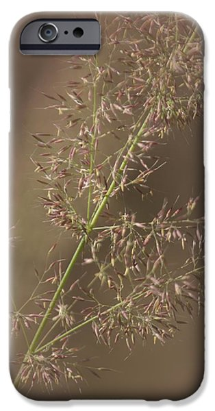 Summer iPhone Cases - Natures Calm iPhone Case by  The Art Of Marilyn Ridoutt-Greene