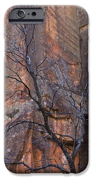 West Fork iPhone Cases - Natures Contrast iPhone Case by Sue Cullumber