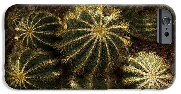 Botanic Illustration iPhone Cases - Natures Fireworks iPhone Case by Kathleen Scanlan