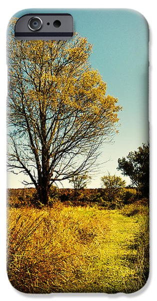 Pathway iPhone Cases - Natures Pathway iPhone Case by Christina Rollo