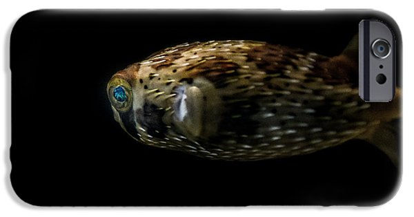 Porcupine Fish iPhone Cases - Naturescape 52 a iPhone Case by  Otri  Park
