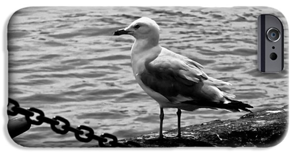 Seagull iPhone Cases - Navy Pier Seagull iPhone Case by Chris Flees