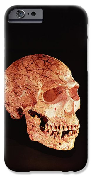 Cut-outs iPhone Cases - Neanderthal Skull, Discovered On Mt Carmel, Palestine C.1920 Bone iPhone Case by Prehistoric