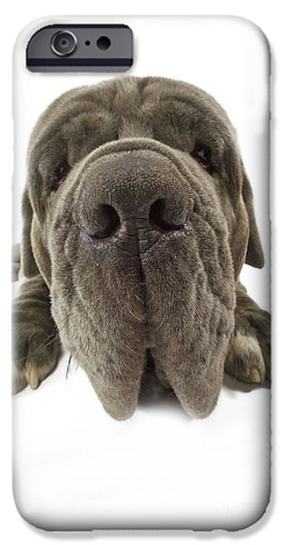 Dog Close-up iPhone Cases - Neapolitan Mastiff Nose iPhone Case by Jean-Michel Labat