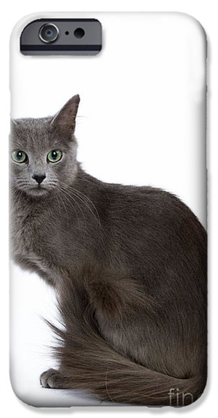 Gray Hair iPhone Cases - Nebelung Cat iPhone Case by Jean-Michel Labat