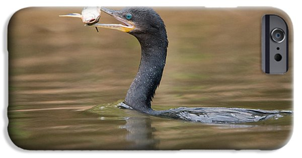 Sea Birds iPhone Cases - Neotropic Cormorant Phalacrocorax iPhone Case by Panoramic Images