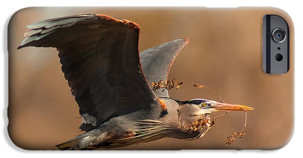 Cabin Window iPhone Cases - Nest-Building Great Blue iPhone Case by Robert Frederick