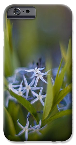 Floral Photographs iPhone Cases - Nest of Blue Stars iPhone Case by Mike Reid