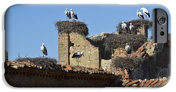 Zoologic iPhone Cases - Nesting Stork Colony iPhone Case by Heiko Koehrer-Wagner