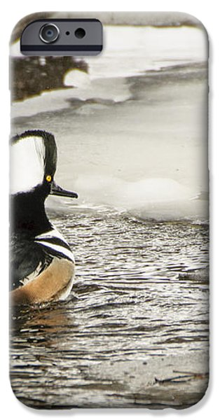 Never Too Cold To Mate iPhone Case by Ilene Hoffman