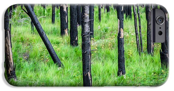 High Park Fire iPhone Cases - New and Old Burnt Trees and New Grass Glacier National Park iPhone Case by Rich Franco