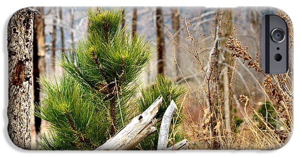 Forest iPhone Cases - New Beginnings iPhone Case by Deb Halloran