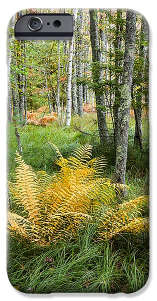 Nature Scene iPhone Cases - New England Ferns and Forest - Early Fall Acadia National Park iPhone Case by Bill Swindaman