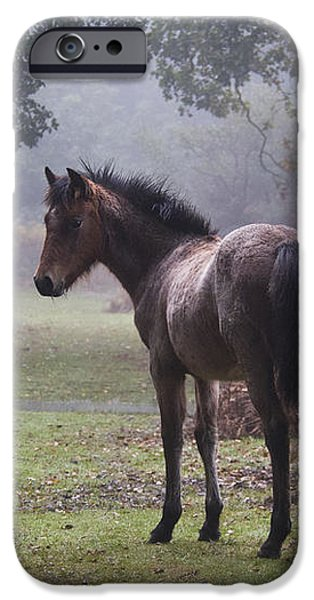 New Forest Pony iPhone Case by Dave Pressland FLPA