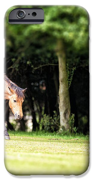 New Forest pony iPhone Case by Jane Rix