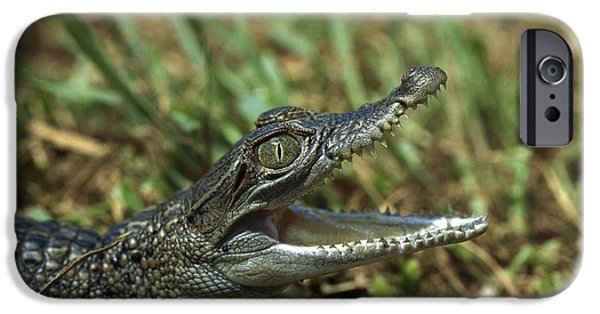 New Individuals iPhone Cases - New Guinea Crocodile Baby New Guinea iPhone Case by Konrad Wothe
