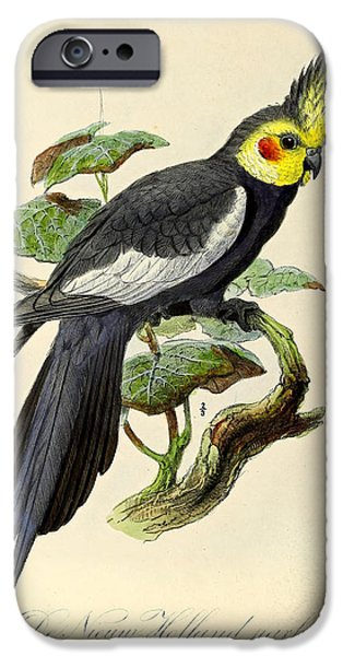 Holland Paintings iPhone Cases - New Holland Parrakeet iPhone Case by J G Keulemans