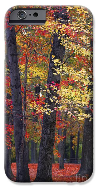 Colors Of Autumn iPhone Cases - New Jerseys Reds iPhone Case by Marco Crupi