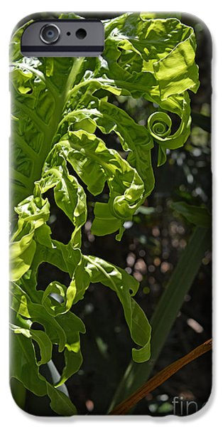 Philodendron iPhone Cases - New Leaf  iPhone Case by Roy Thoman