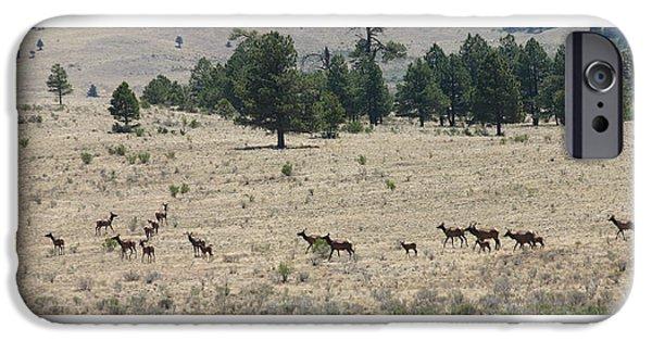 Bob Cats iPhone Cases - New Mexico Elk Herd iPhone Case by Jack Pumphrey