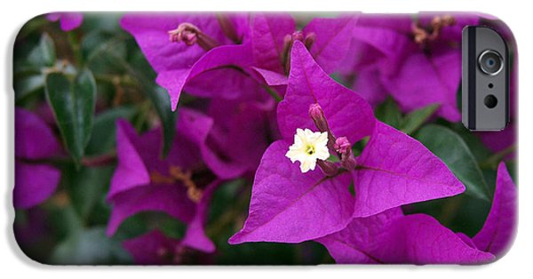Floral Art iPhone Cases - New River Bougainvillea iPhone Case by Rona Black