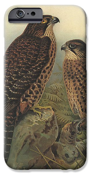 Falcon iPhone Cases - New Zealand Falcon iPhone Case by J G Keulemans