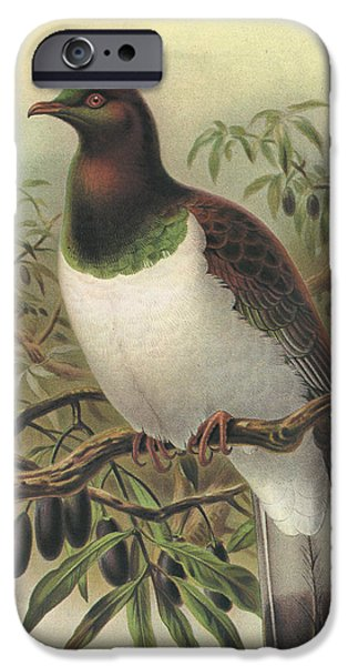 Pigeon iPhone Cases - New Zealand Pigeon iPhone Case by J G Keulemans