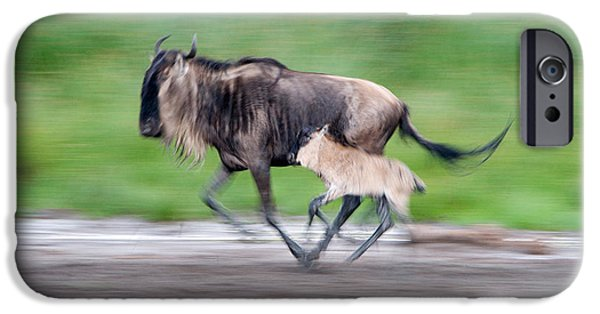Bonding iPhone Cases - Newborn Wildebeest Calf Running iPhone Case by Panoramic Images