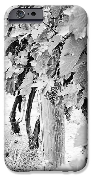 Ice Wine iPhone Cases - Niagara Grapes No.2 iPhone Case by Scott Pellegrin