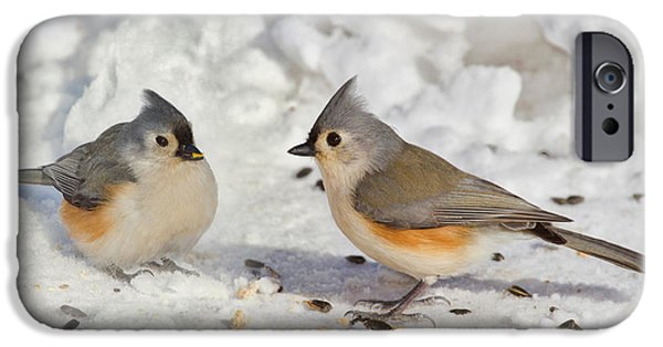Titmouse iPhone Cases - Nice Pair Of Titmice iPhone Case by John Absher
