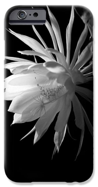 Blooming Pyrography iPhone Cases - Night Blooming Cereus iPhone Case by Patrick Hazen
