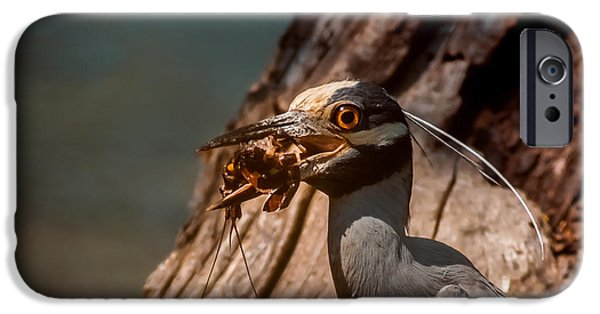 Crawfish iPhone Cases - Night Heron and Crawdaddy iPhone Case by Robert Frederick